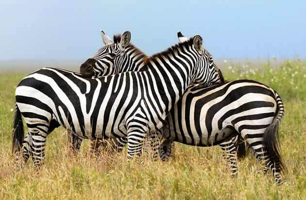 Brand Positioning: How to Stand Out from the Herd